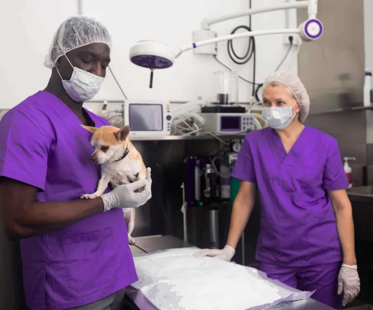 Veterinary-Medicine-Students -with-Dog-16